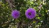 alan - purple flowers