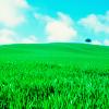 Stock // Grass field
