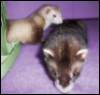 Mia and Tek