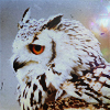 coba_owl
