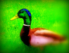 josie_and_duck userpic