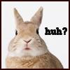 bunny going huh?