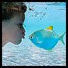 рыбка-рыбка