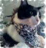 Marley in his bandana