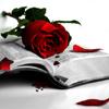 rose_red5