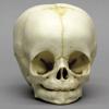 baby skull photo 01