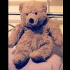 muffin, . teddy
