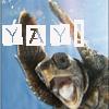 mundungus42: Yay Turtle