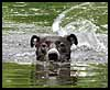 Charlie Swimming