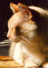 segmentvs userpic