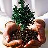 tree in hand: nomnomicons