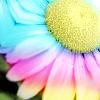annaed770: Rainbow Daisy
