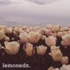lemonedx userpic