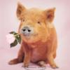 flower pig