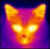 Radioactive kitty
