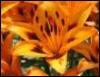 orangesprite