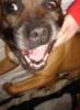 otis_doglump userpic