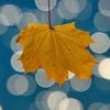 semennika userpic