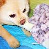 ralphiedog userpic