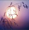 histlin userpic