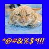 Swearcat