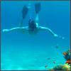 S Dive