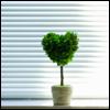 love green (enriana - shareable)