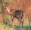 antelope_writes