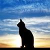 catsneezes userpic