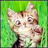 matar_fi_sabah userpic