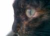 galeesha userpic