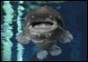 bigcatfish userpic