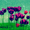 lolitacorpse userpic