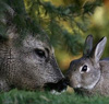 олень кроль