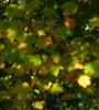 dance_of_autumn userpic