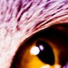 da_da_zo userpic
