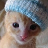 Blue Hat Kitten