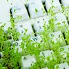 growing keyboard grass