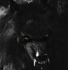 animals: black werewolf