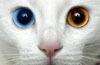 chatoyantlife userpic