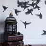 frayed_misfit: birdcage