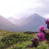 Scotland - hills and thistles