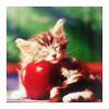 [misc] kitty + apple