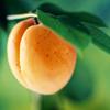 Alexandra Leaving: Photos - Summer fruit