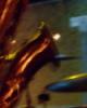 jazzzguy userpic