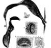 radioplant userpic