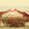 animals_protect