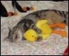 кот и птиц