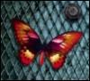papillon_san userpic
