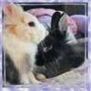 Clarissa: bunnies